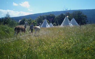 village tipis herbe et lamas