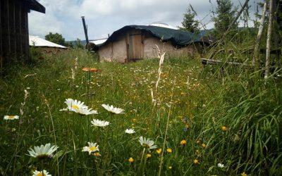 herbe et écohutte du printemps